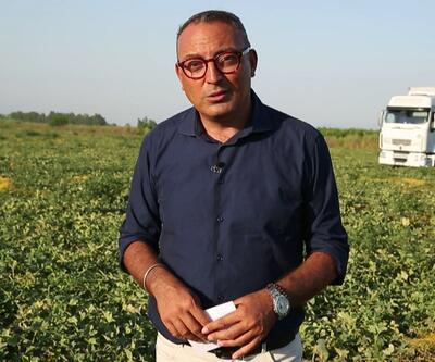 Para Dedektifi Cem Seymen, Çukurova'nın bereketli topraklarındaki tarım arazilerinde üreticilerle bir araya geldi