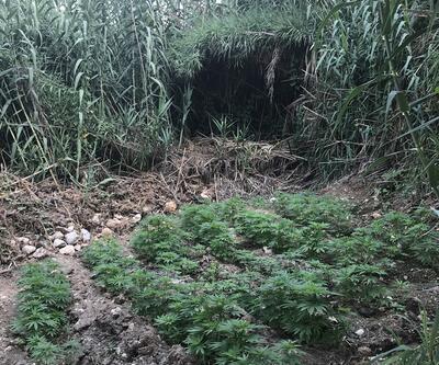 Hint keneviri ekili alan drone ile tespit edildi