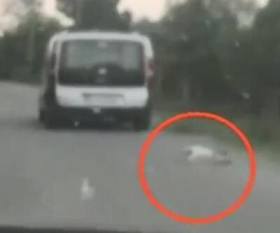 Aracına bağladığı köpeği sürükledi, 'Köpek zaten ölüydü' diye kendini savundu