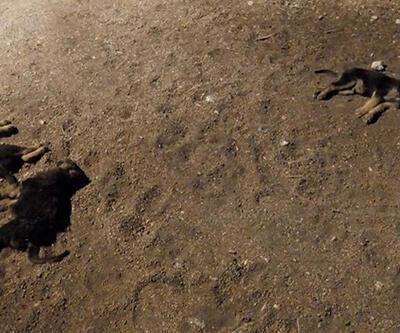 Yavru köpekleri aracıyla ezip kaçan cani sürücü pes dedirtti