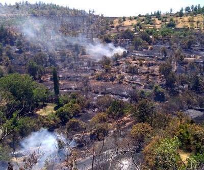 Mersin'de bahçede çıkan yangın ormana sıçradı