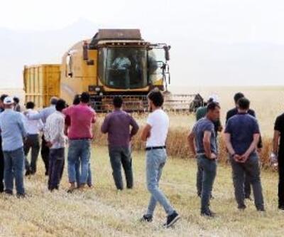 Vali, tarlada buğday biçti