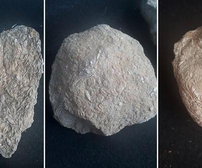 Gabar Dağı'nda bulundu! Tam 45 milyon yıllık...