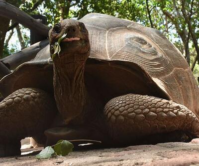 Zanzibar'ın kaplumbağa adası: Changuu