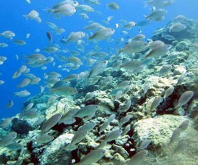 Saros'un su altı güzellikleri büyülüyor