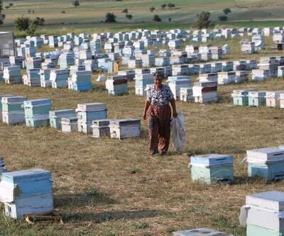Muğlalı kadın arıcı 27 yıldır Yüksekova'da arıcılık yapıyor