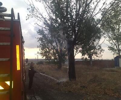 Edirne'de yıldırım düşen ağaç yandı