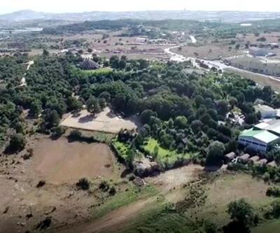 Doğa aşığı adam kayalık araziyi 10 bin ağaçla 'orman'a dönüştürdü