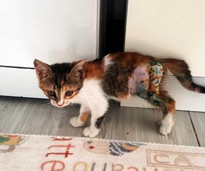 Sokakta bulunan ayağı kırık yavru kedi tedavi edildi