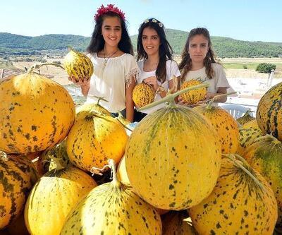 Urla'da kavun festivali başlıyor