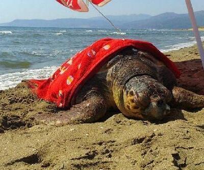 Doğaseverlerin duyarlılığı yaralı caretta caretta'yı kurtardı