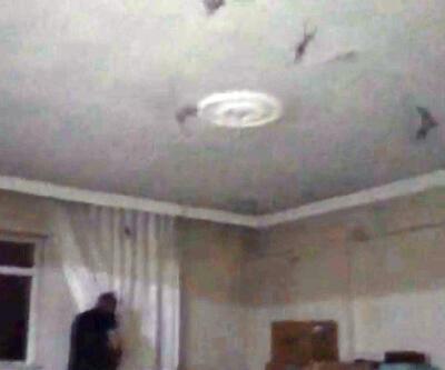 Evlerini yarasalar bastı