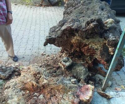 Asırlık çınar ağacı, otomobilin üzerine devrildi