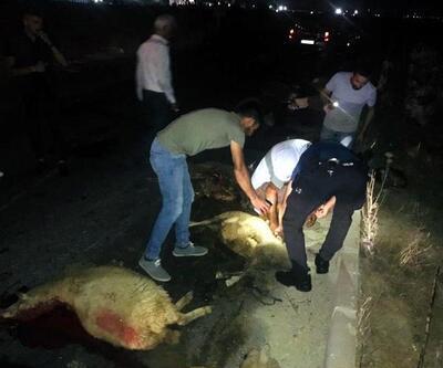 Otomobilin çarptığı sürüde 20 koyun telef oldu