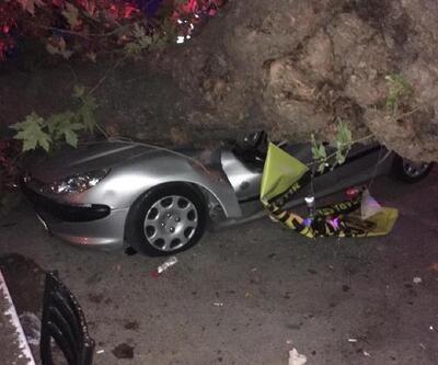 Devrilen ağaç 3 otomobile zarar verdi