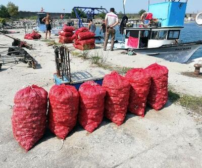 Karadeniz'de palamut avlayamayan balıkçılar deniz salyangozuna yöneldi