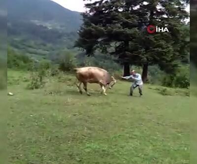 Sahibiyle oyun oynayan inekler görenleri şaşırttı