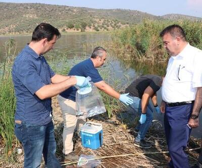Selçuk'taki balık ölümlerinin araştırılması için gölden numune alındı