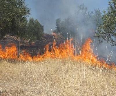 Burhaniye'de ot yangını, zeytinliklere sıçradı