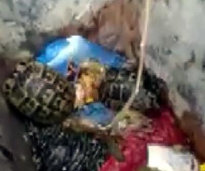 Çöpe atılan kaplumbağaları, temizlik görevlisi kurtardı