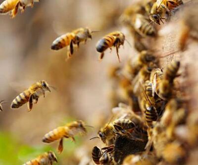 Arıların saldırdığı 19 tarım işçisi hastaneye kaldırıldı