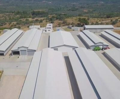 Türkiye'nin en sağlıklı keçi çiftliği İzmir'de kuruldu