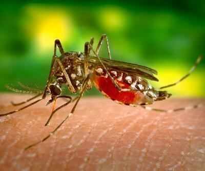 Sivrisinekler erkekleri daha çok ısırıyor