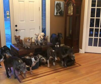 17 köpek 1 fotoğrafta buluşursa