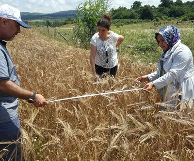 Yüzde 50 hibeli tohum desteği için talep alımları başladı