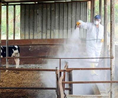 Tarım ve hayvancılık alanları ilaçlanıyor