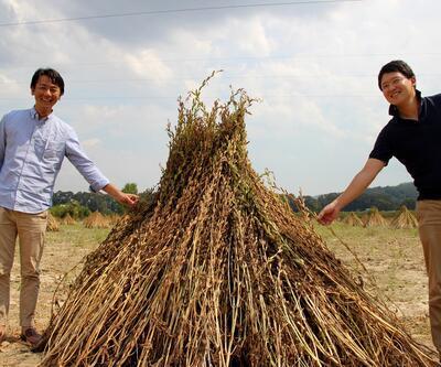 Japonlar 'Suşi' susamı için Muğla'da