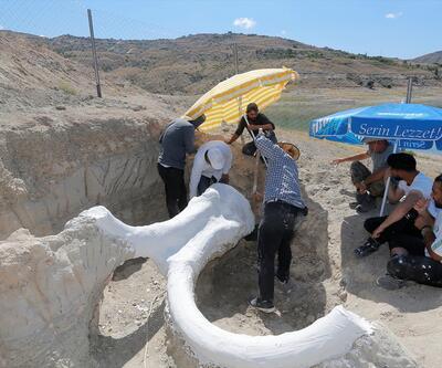 """7,5 milyon yıllık fosil """"alçı ceketle"""" taşındı"""