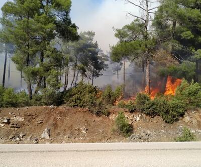 Bursa'da çamlık alanda yangın çıktı