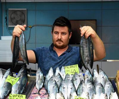 Çanakkale Boğazı'nda yakalanan ilk palamutlar tanesi 40 liradan satılıyor