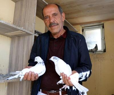 40 güvercine evinde bakıyor