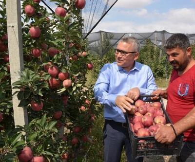 Vali Şimşek Bor'da elma hasadı yapan işçilerle buluştu