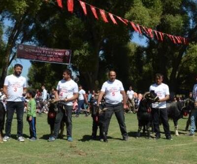 Elmalı'da renkli Çoban Festivali