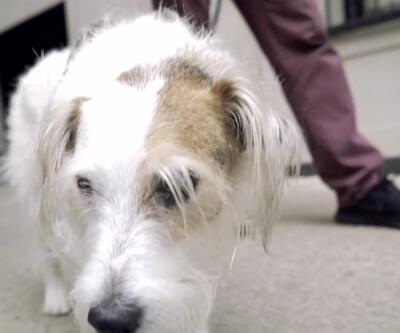 Avustralya'da köpeğini gezdirmeyene ceza