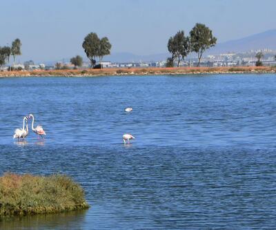 İzmir'de pembe beyaz flamingolar görsel şölen oluşturdu