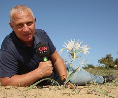 Yeşil Doğa nadide bir bitki türü olan kum zambaklarının peşine düştü