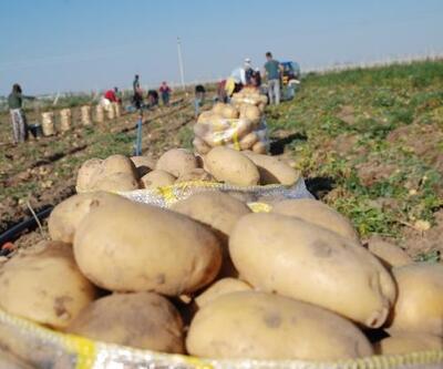 Niğde'de kışlık patates hasadı başladı