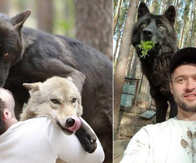 Rus iş insanının sıra dışı yaşamı: Evcil hayvan gibi baktığı kurtlarla yaşıyor