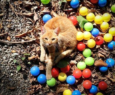 'Kedi Kasabası'nda keyifler yerinde