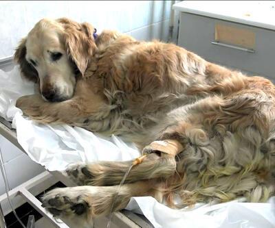 Artık hizmet vermeyecek! Yılda 50 bin hayvan tedavi ediliyordu