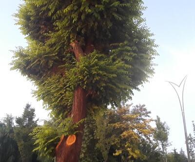 İş yerinin önündeki 2 ağacı kesen esnafa, 50 bin TL para cezası
