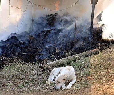 Yavrularının öldüğü yangın yerinden ayrılmadı