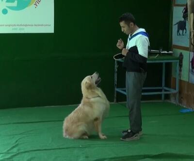 Köpek sahipleri uzun yaşıyor