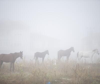 Edirne'de sis hayatı olumsuz etkiledi