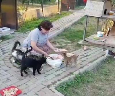 Temizlik görevlileri poşetin içinde telef olan kedi buldu