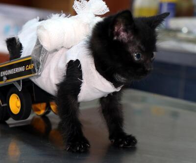 Yavru kedi, ilk adımlarını yürüteçle attı